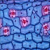 生物显微镜实拍图片